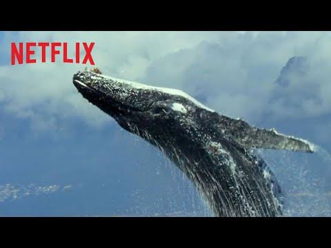 Nuestro Planeta | Tráiler oficial extendido | Netflix